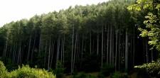 boschi Sila