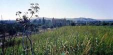 Maccuditi collina