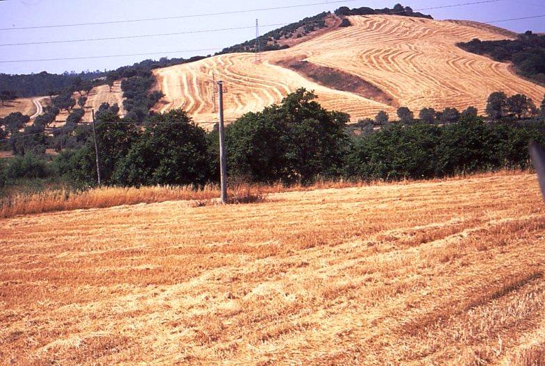 Crotone valle lamposa846