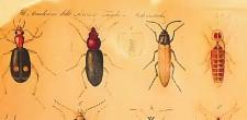 entomologo tavola insetti - Copia